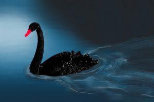 Winston-Black-Swan-Coronavirus-Covid-19-1290×860-1